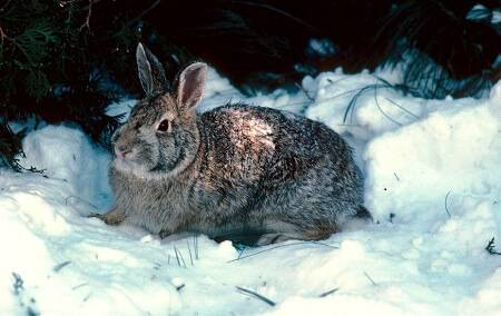 How to Keep Rabbits Warm in Winter