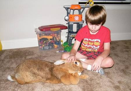 How to take care of rabbits at home