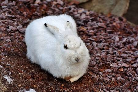 how cold can rabbits tolerate