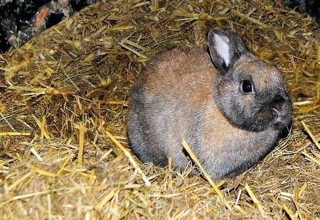 what should rabbits sleep on