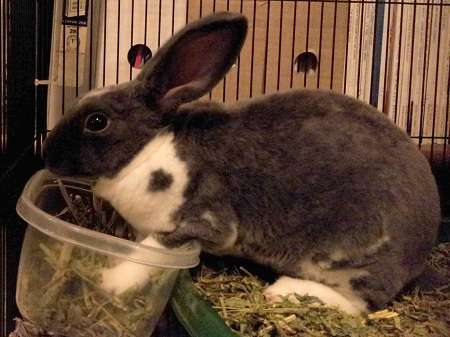 Rabbit stopped using Litter box