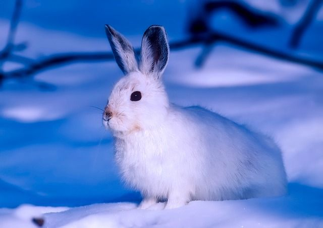 What to Feed Wild Rabbits in Winter
