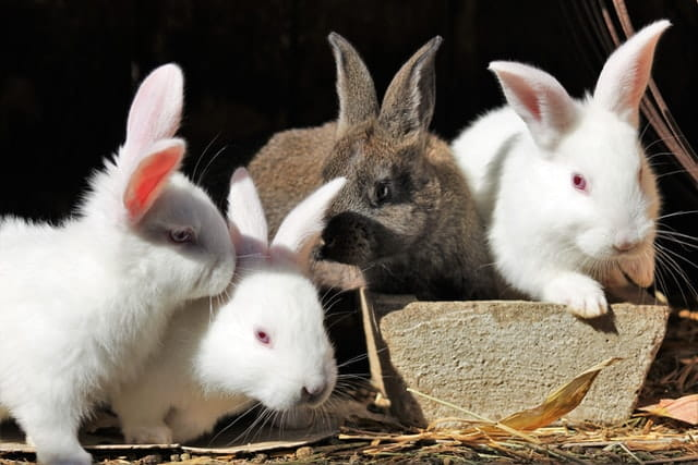 rabbit cage cleaning supplies